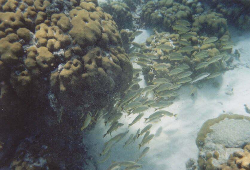 Rafa Koralowa Belize